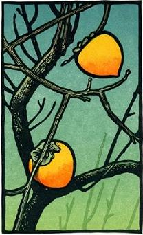 Winter Persimmons